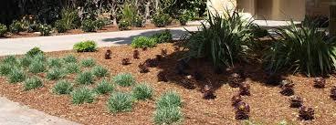 Small Picture Drought Tolerant Landscape