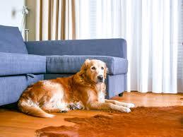 Auf dem fußboden liegt ein weicher teppich. Urlaub Mit Hund
