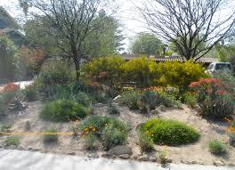 front yard no lawn native garden front yard no grass designs photos