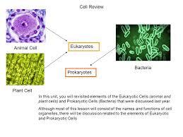 Bacteria Animal And Plant Cell Venn Diagram Cell Review Eukaryotes Animal Cell Bacteria Prokaryotes