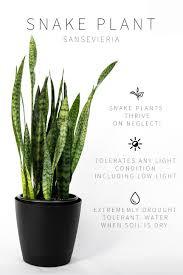 Low Light Indoor Master List Of Low Light Indoor Plants Plants Indoor