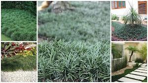 Em seguida fixe uma estaca de bambú de aproximadamente 20 centímetros, próximo a extremidade superior da&nb. Grama Preta 46 Jardins Magnificos Como Cuidar E Plantar
