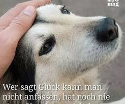 45 Images About Hunde Sprüche On We Heart It See More About Dog