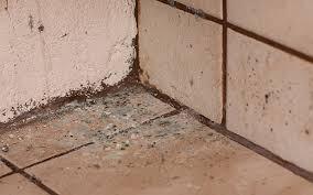 Mould On Tiled Corner