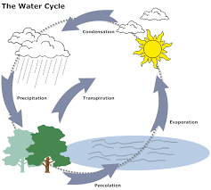 Flow Chart On Water Cycle Example Image Water Cycle Diagram Water Cycle Diagram