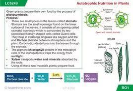 essay on autotrophic nutrition  essay on autotrophic nutrition