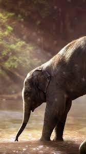 Baby Elephant Iphone Background ...