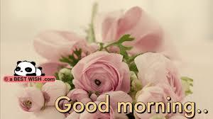 cute good morning image hd