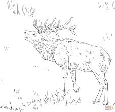 Small Picture Elk coloring page Free Printable Coloring Pages