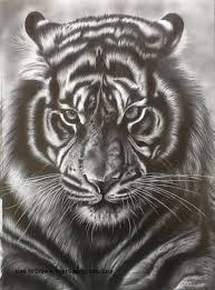 easy tiger pencil drawing. Simple Pencil How To Draw A Tiger Step By Easy Face Pencil Drawing And