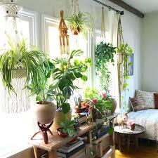 best indoor plants for office. Splendid Best Plants For Office With No Windows Decorating Indoor