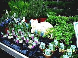 how to start a small garden. How To Start A Small Garden Let Your Seedlings Gardening Business Starting