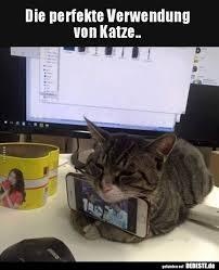 Die Perfekte Verwendung Von Katze Lustige Bilder Sprüche Witze