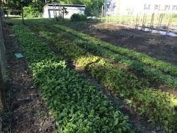 Kitchen Garden Farm Collinson Farm Csa Member Updates