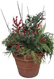 344 Best Winter Containers Images On Pinterest  Container Container Garden Ideas For Winter