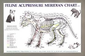 Feline Acupressure Meridian Chart Lfa 92528