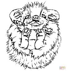 Small Picture Cute Baby Porcupine coloring page Free Printable Coloring Pages
