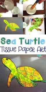 Best 25 Turtle information ideas on Pinterest