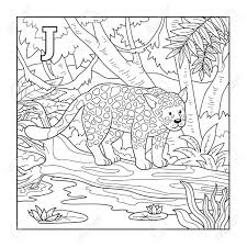 coloring book jaguar colorless ilration letter j stock vector 38420319
