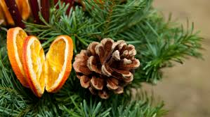 Drying Out Oranges Christmas Decorations Scented Orange Slice Tree Decorations National Trust