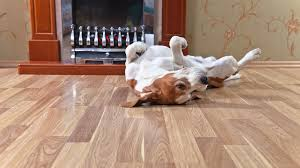 what is the best flooring for dogs and other rambunctious house pets