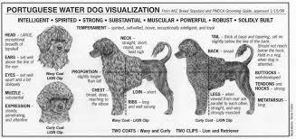 Dog Haircut Chart Portuguese Water Dog Grooming Chart Goldenacresdogs Com