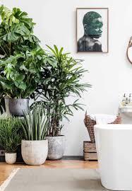 Mit Diesen Pflanzen Fürs Bad Eine Tropische Wohlfühloase Einrichten