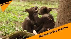 Дипломаты РФ навестили в Таллинне медведя-земляка перед ...