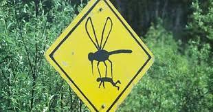 Одежда, которая практически полностью защищает от комаров