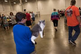 National Capital Cat Show — Joshua Yospyn, Photographer