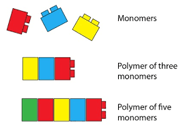 Monomer And Polymer Chart Monomers And Polymers Duelling With Science Nail