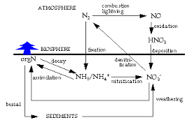 Co2 To O2 Conversion Chart Chapter 6 Geochemical Cycles