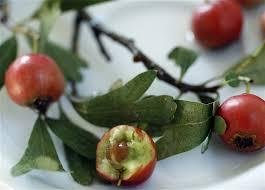 Hawthorn Berries (Zaaroor) - Taste of Beirut
