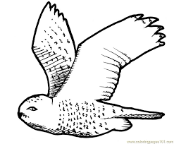 Flying Owl Coloring Page Free Owl Coloring Pages