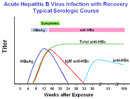 Hep B Chart Hepatitis B Foundation Understanding Your Hepatitis B Test
