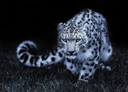 If you don't find the exact resolution you are looking for, then go for 'original' or higher resolution which may fits perfect to your desktop. White Cheetah Wallpapers Wallpaper Cave