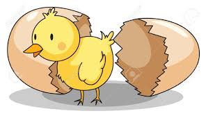 chicken hatching clipart. Brilliant Hatching Download This Image As Throughout Chicken Hatching Clipart I