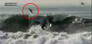 great white shark jumping at a helicopter during training. Wonderful Great Surfer AND Shark A Shark Popped Out Of The Ocean Just Feet Behind A Surfer With Great White Shark Jumping At Helicopter During Training U
