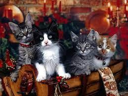 Christmas animals ...