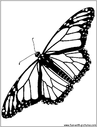 Small Picture Monarch Butterfly Coloring Page Viewing Gallery For Monarch