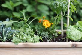 4 steps to creating and styling an outdoor raised vegetable garden inspired by charm