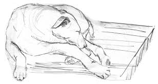 Image result for pencil art of dog