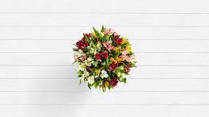 100 <b>Blooms</b> of Peruvian <b>Lilies</b>