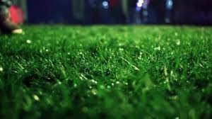 Soccer field grass Flower Background Meadow With Green Grass Loop Able With Alpha Channel Stock Video Footage Storyblocks Video Video Blocks Meadow With Green Grass Loop Able With Alpha Channel Stock Video