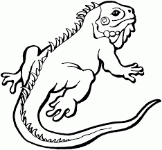 Small Picture Lizard coloring pages iguana ColoringStar