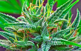Free download Marijuana weed 420 t ...