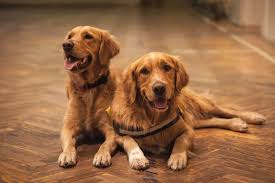 7 best types of flooring for dogs