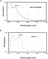 Action Spectrum Fig 6 Action Spectrum For Cryptochrome Dependent