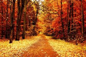 fall nature backgrounds. Simple Backgrounds Fall Colors On Nature Backgrounds A