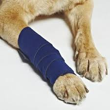 stop dog from licking wound. Simple Dog Healerdoglegwraps For Stop Dog From Licking Wound